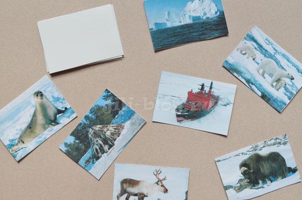 Дидактическая игра на тему Арктика