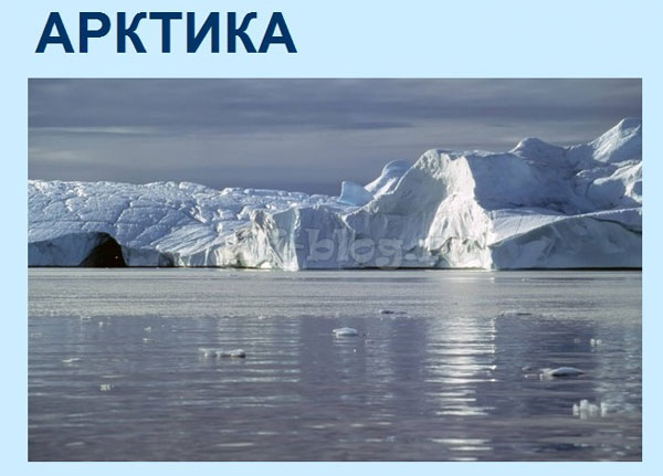 Презентация на тему Арктика скачать