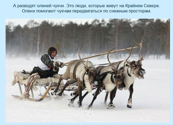 Пример слайда из презентации Арктика