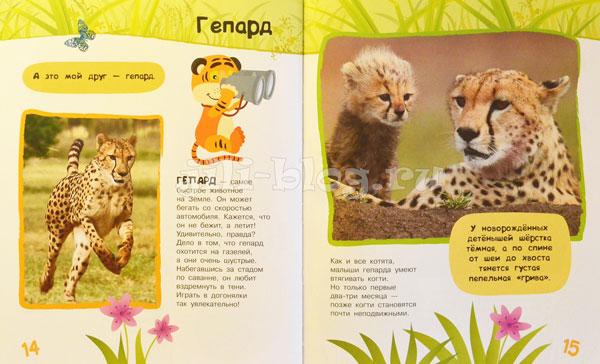 Энциклопедия о животных для малышей Фото страниц